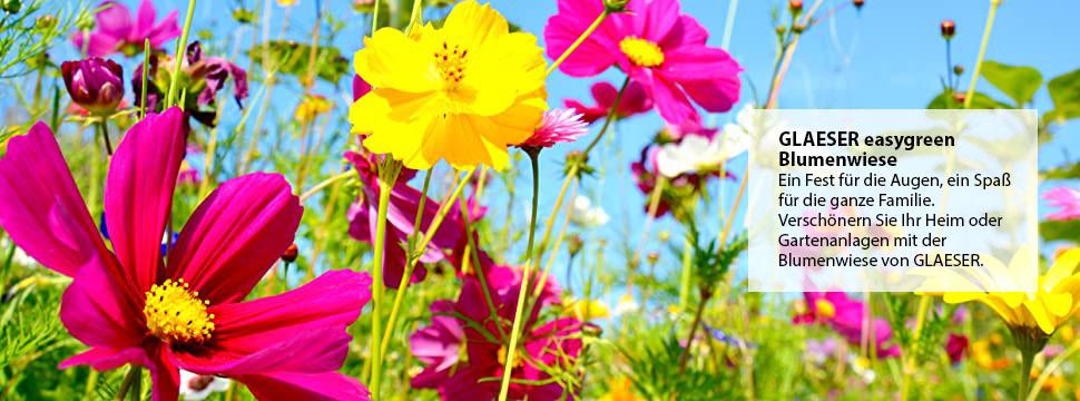Glaeser Green Blumenwiese